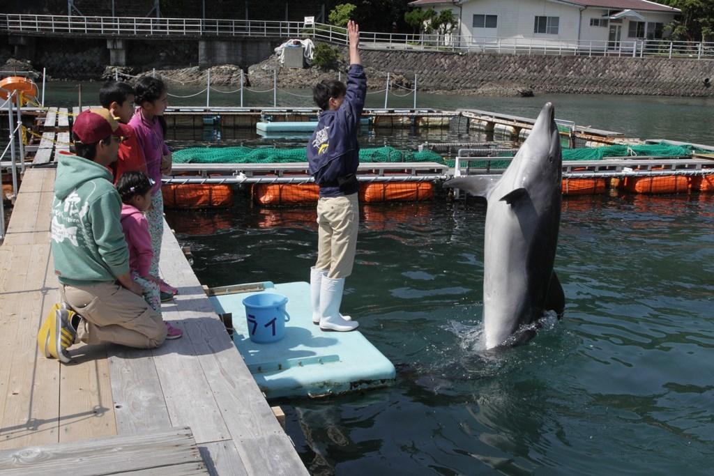 下田海中水族館 ファミリードルフィン
