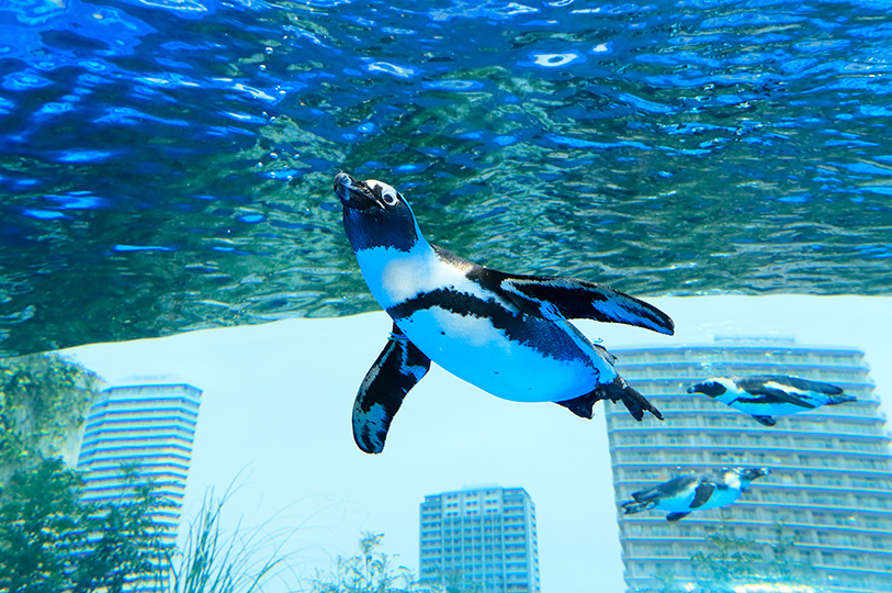 池袋最強デートスポットは「サンシャイン水族館」!社会人カップルは夜がおすすめ