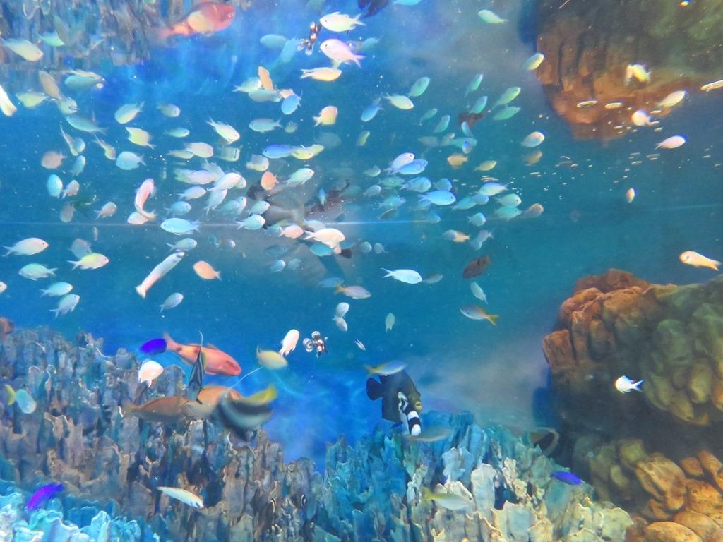 サンシャイン水族館 水槽内2