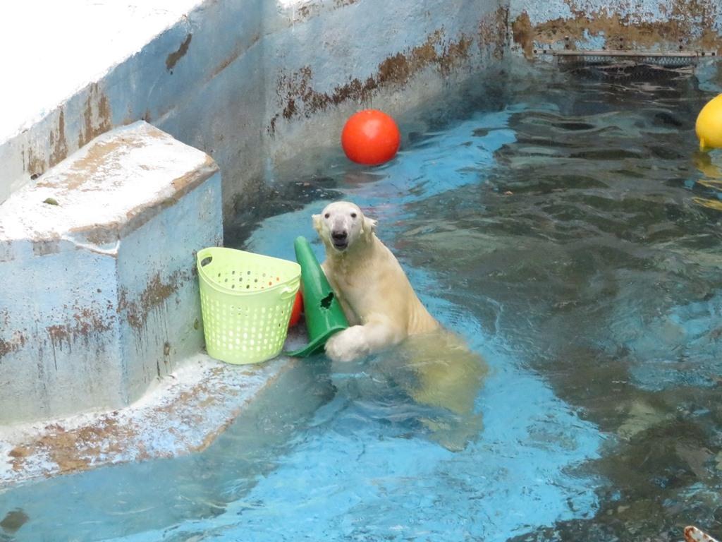 天王寺動物園 北極クマ