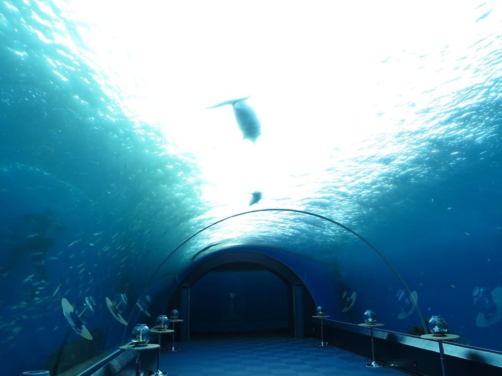 八景島シーパラダイス 水槽の中のイルカ