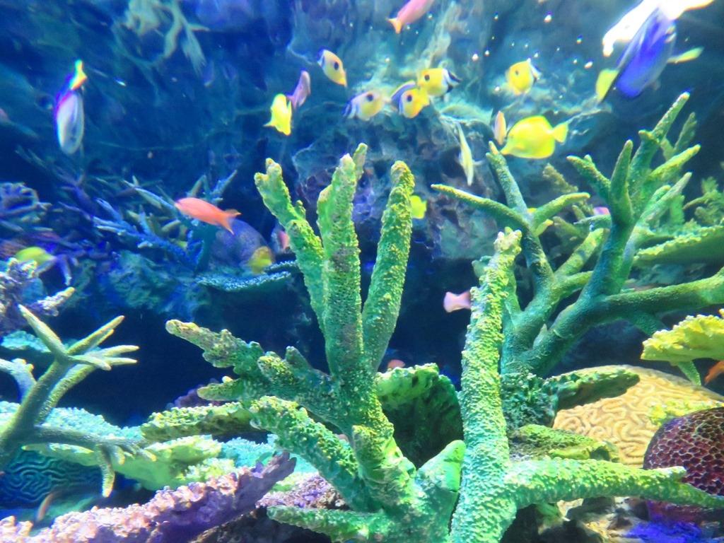 サンシャイン水族館 サンゴ