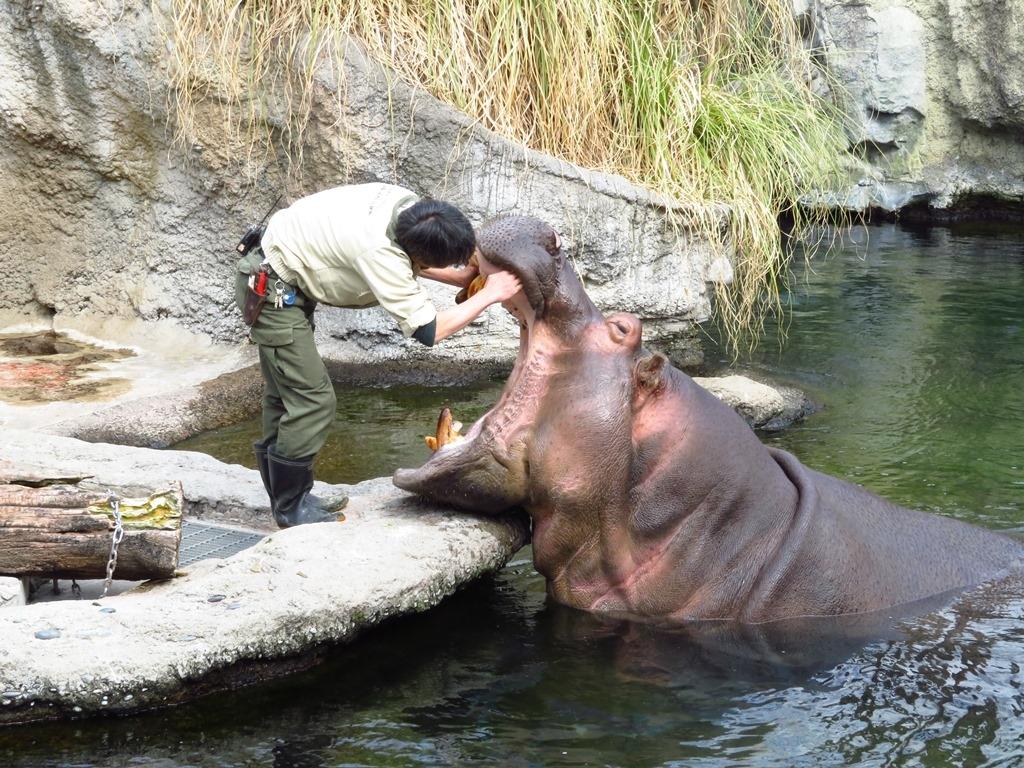天王寺動物園 かば