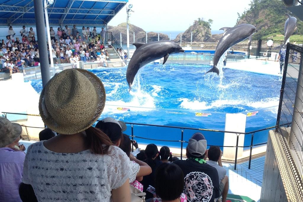 【10%割引】越前松島水族館の入場料金・割引チケット・クーポン・前売り券|2021年版