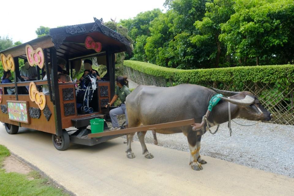 ビオスの丘 水牛車