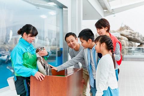 仙台うみの水族館 ペンギンパフォーマンス