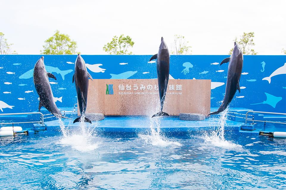 珍しいイルカがいる?仙台うみの杜水族館のショー攻略&イルカ出没スポット