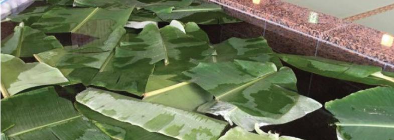バナナ葉風呂