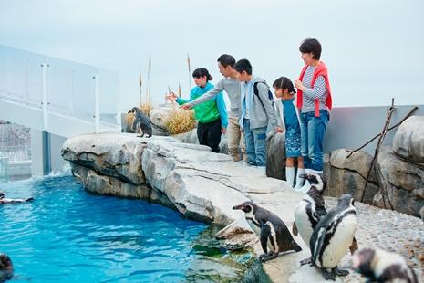 仙台うみの杜水族館 ペンギンツアー