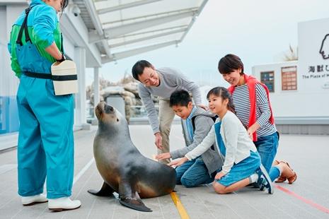 仙台うみの水族館 オタリアパフォーマンス