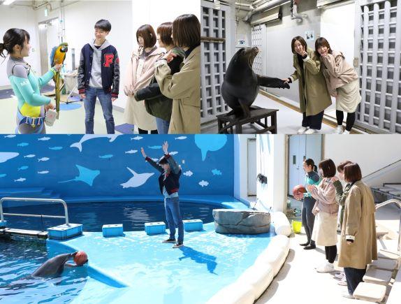 仙台うみの杜水族館 スタジアムバックヤードツアー