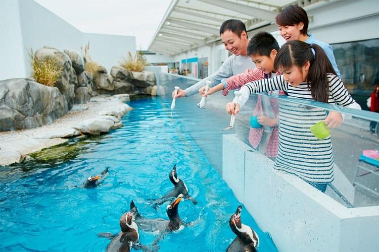 仙台うみの杜水族館 ペンギンフィーディングタイム