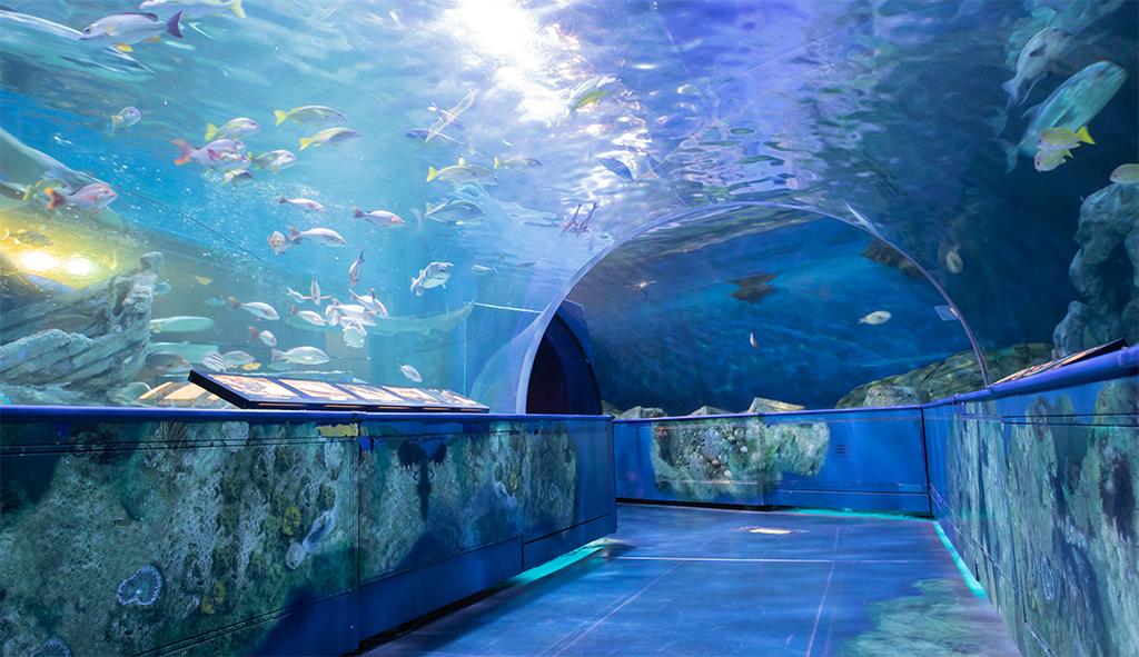 しながわ水族館-トンネル水槽