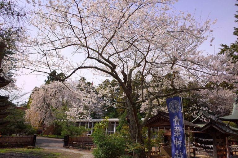 (2)青葉神社
