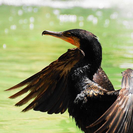 天王寺動物園-鳥の楽園エリア