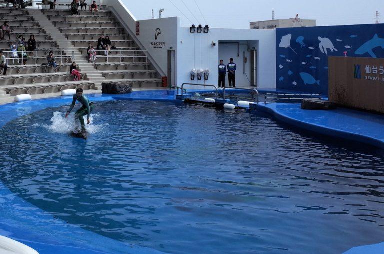 (3)仙台うみの杜水族館のイルカショー