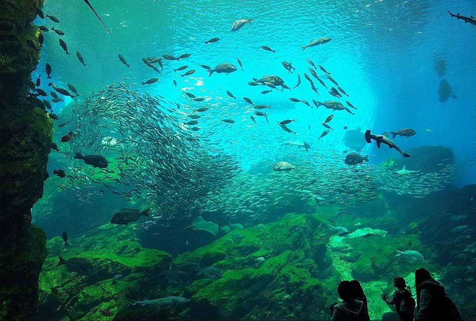 (3)仙台うみの杜水族館 割引
