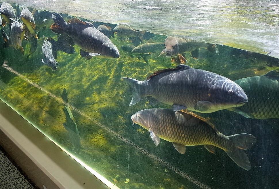 (6)仙台うみの杜水族館 割引