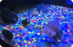 しながわ水族館-クラゲたちの世界