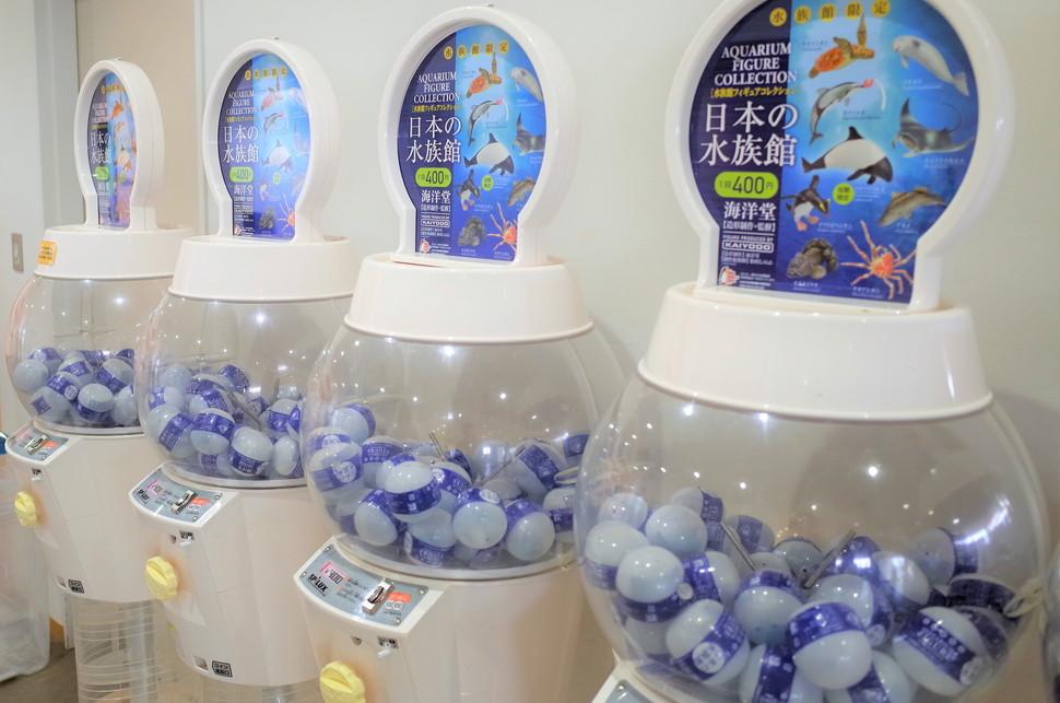 (14)仙台うみの杜水族館 割引