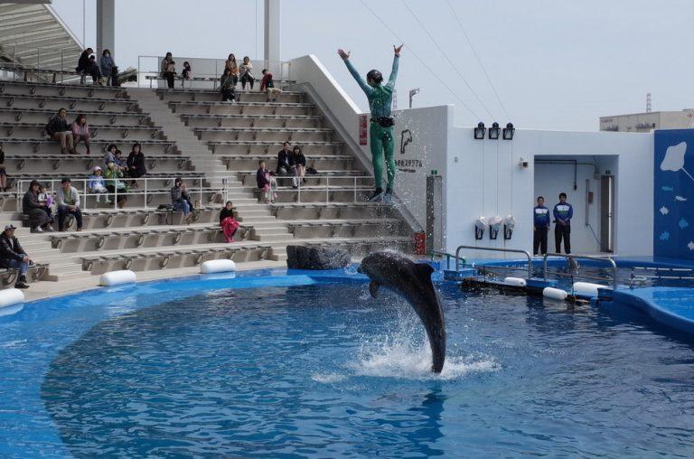 (4)仙台うみの杜水族館のイルカショー