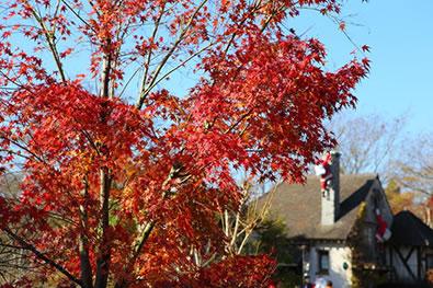 箱根ガラスの森美術館-紅葉の山々とガラス庭園