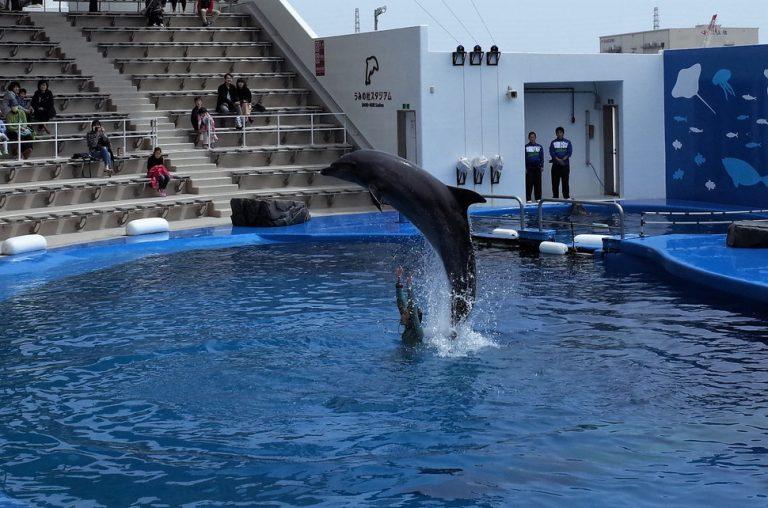 (2)仙台うみの杜水族館のイルカショー