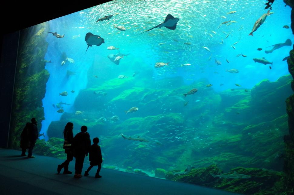 仙台 うみ の 杜 水族館 割引