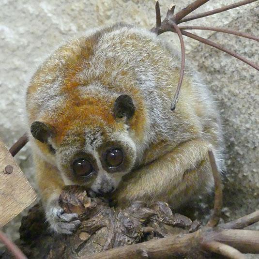 天王寺動物園-アジアの熱帯雨林ゾーン