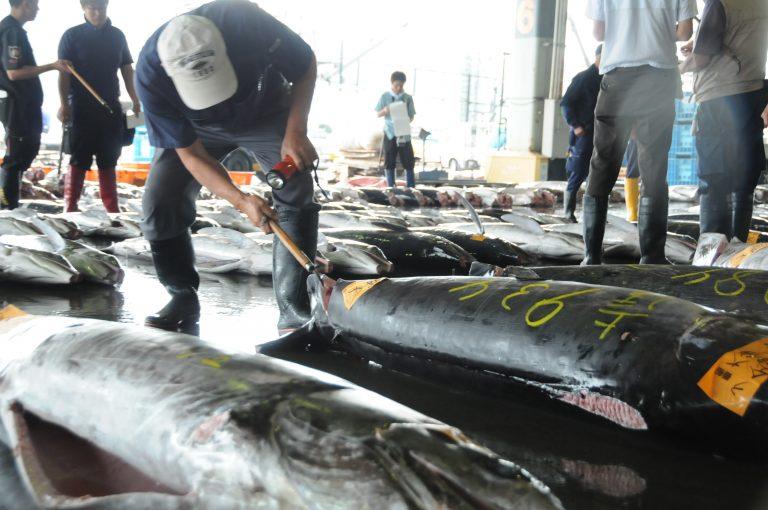 (2)気仙沼市魚市場