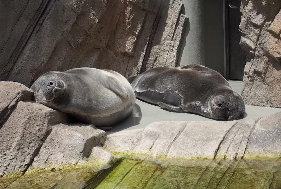 (8)仙台うみの杜水族館 割引