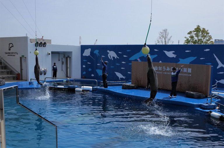 (1)仙台うみの杜水族館のイルカショー