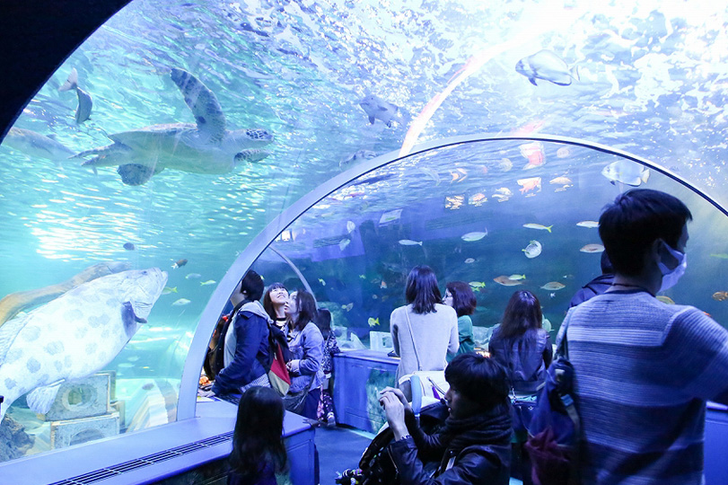 【割引あり】しながわ水族館を徹底解説|お魚やショーのおすすめスポットもご紹介