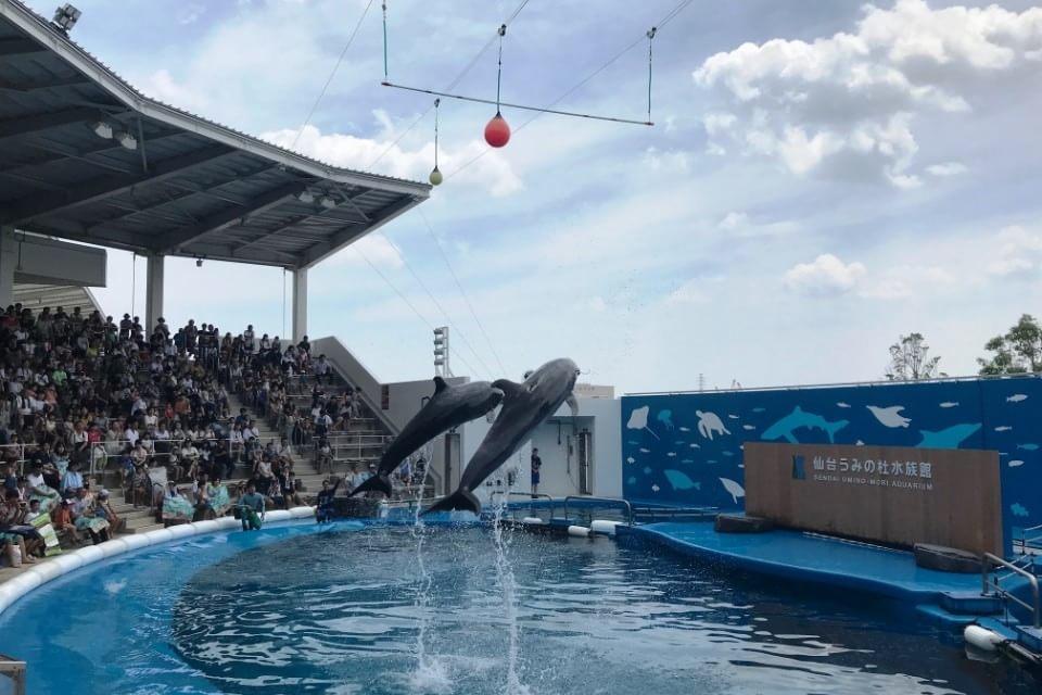 【割引あり】仙台うみの杜水族館を徹底解説|東北最大級のイルカ&アシカショーを楽しもう!