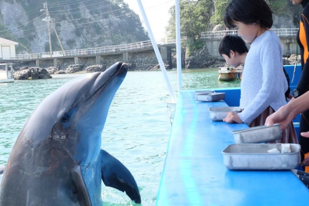 """【割引あり】下田海中水族館はイルカと一緒に遊べる&泳げる""""唯一無二""""の体験イベントが沢山ある!"""