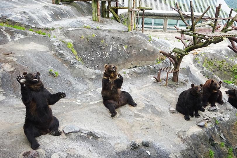 【割引あり】のぼりべつクマ牧場を1日満喫できる!見どころ&お得情報まとめ