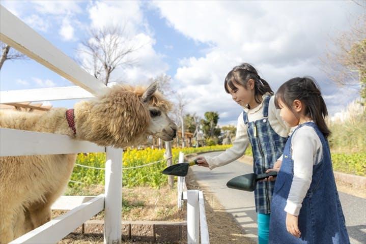 【徹底調査】神戸どうぶつ王国の割引チケット・クーポン・前売り券情報|2020年最新