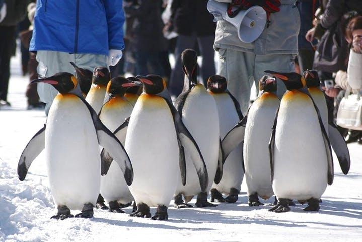 【割引まとめ】旭山動物園の入場料金・割引チケット・クーポン・前売り券情報|2020年最新