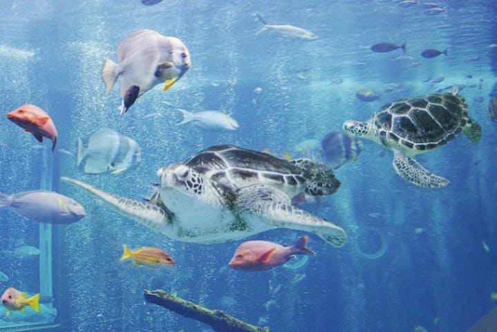 【割引まとめ】箱根園水族館の入場料金・割引チケット・クーポン・前売り券情報|2021年最新