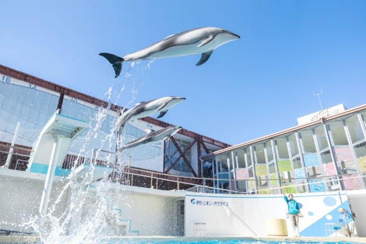 静岡県の水族館おすすめ7選!イルカショーやふれあい体験で思い出作り