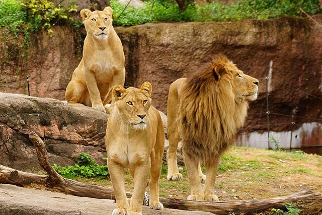 【割引まとめ】天王寺動物園の入園料金・割引チケット・クーポン・前売り券情報|2021年版