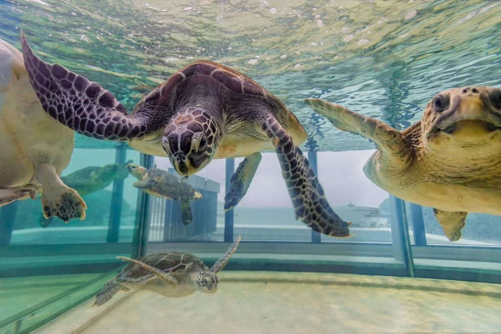 高知県の水族館おすすめ4選!人気のイルカやカワウソたちと触れ合える