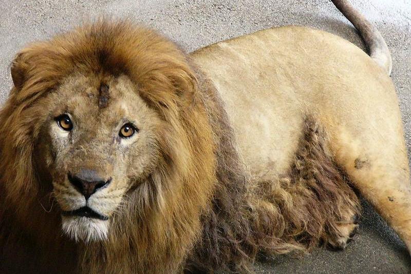 熊本県の動物園・牧場おすすめ6選!人気のライオンやシロクマにも出会える