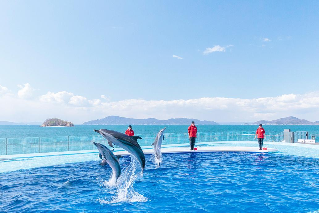 香川県の水族館おすすめ3選!人気のイルカ・ペンギン・カワウソに会いにいこう