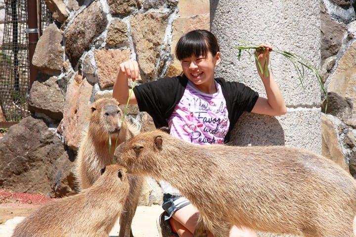 【25%割引】伊豆シャボテン動物公園の入場料金・割引チケット・クーポン・前売り券情報|2021年最新