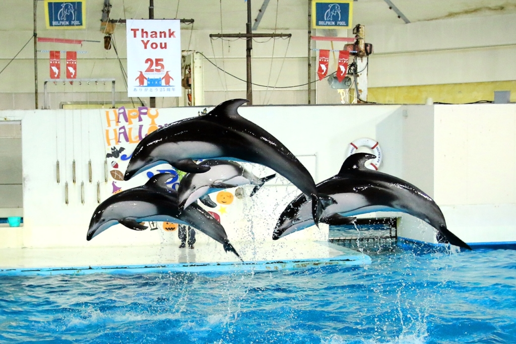 北海道の水族館おすすめ6選!人気のイルカ&アシカショーも楽しめる