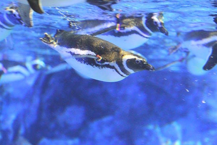【割引まとめ】すみだ水族館の入場料金・割引チケット・クーポン・前売り券情報|2021年最新