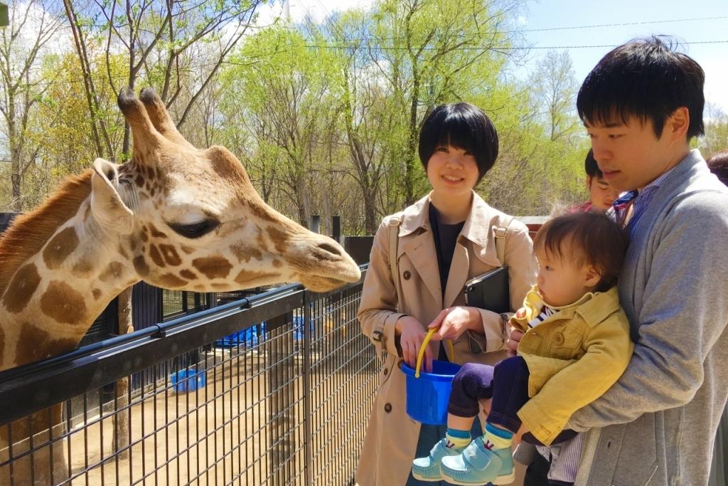 北海道の動物園おすすめ6選!人気のふれあい体験・餌やりも楽しめる