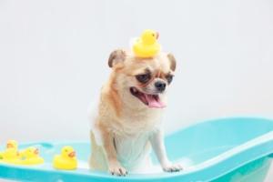 ふわふわ♪犬用シャンプーおすすめ13選|いい匂いや高保湿、オーガニックも