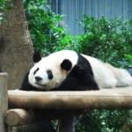 上野・浅草|子連れ家族旅行の1日モデルコース!上野動物園や銭湯など